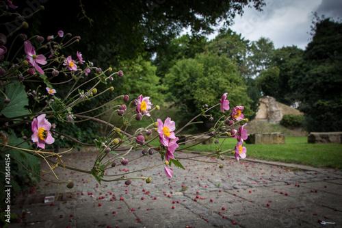 Blumen Burgpark Peine