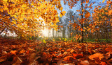 Beauty of autumn / wonderful fall colors in the forest :) - 216614547