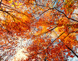 Beauty of autumn / wonderful fall colors in the forest :) - 216615508