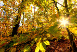 Beauty of autumn / wonderful fall colors in the forest :) - 216615928
