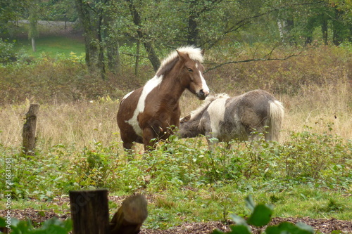 Canvas Paarden my little pony