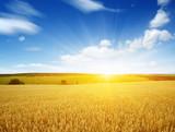 Wheat field and sun - 216635943