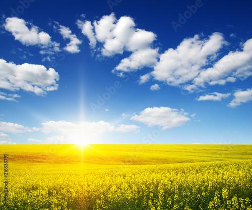 Plexiglas Geel golden field on sky