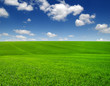Quadro green field and clouds