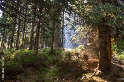 Canvas Lente Wild Forest (Karkonosze Mountains, Poland)