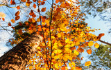 Beauty of autumn / wonderful fall colors in the forest :) - 216645174