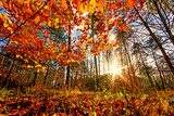 Beauty of autumn / wonderful fall colors in the forest :) - 216645958
