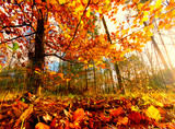 Beauty of autumn / wonderful fall colors in the forest :) - 216647162