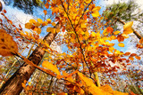 Beauty of autumn / wonderful fall colors in the forest :) - 216647726
