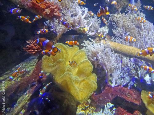 Plexiglas Kameleon Poissons Nemo, Aquarium de Boulogne sur Mer