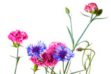 Bouquet of pink and blue garden flowers isolated on a white background