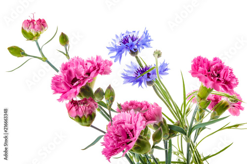Leinwanddruck Bild Bouquet of pink and blue garden flowers isolated on a white background