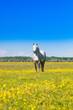 White horse standing on green field in spring in nature park Lonjsko polje, Croatia