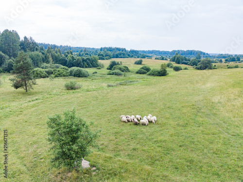 Canvas Pistache Aerial view of the meadow on which a herd of sheep is grazed