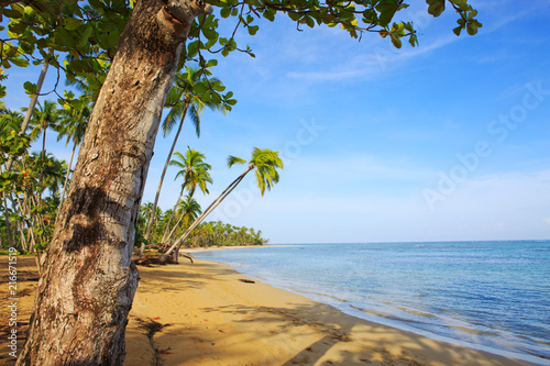 Plexiglas Tropical strand Caribbean sea and green palm trees.palm trees on tropical beach