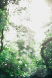Blurred image of green trees and sunlight