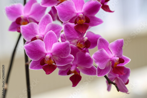 Beautiful purple orchid flowers - 216688369