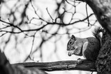 Squirell on a tree