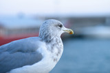 Möve Vogel am Wasser