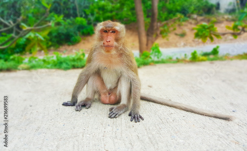 In de dag Aap Monkey lives in the forest, Thailand cute animal