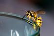 Leinwandbild Motiv Wasp on a glass - danger in the summer