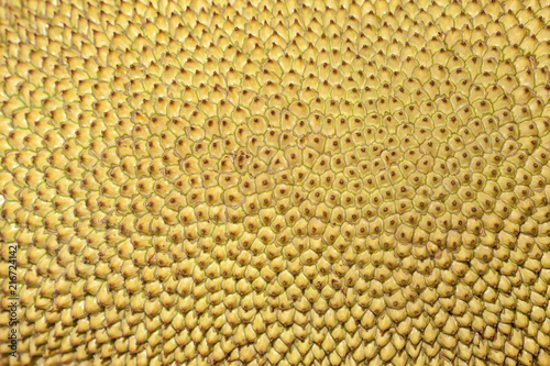 Jackfruit Also known as Jaca fruit in Brazil. - 216724142