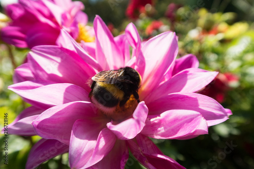 In de dag Bee insects on colorful summer flowers
