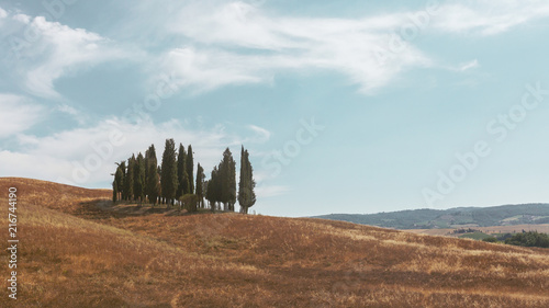 Canvas Toscane Cypresses and Fields of Tuscany, Italy