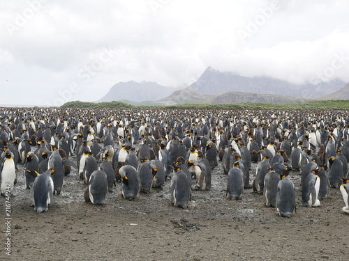 Canvas Pinguin The endangered king penguins in Antarctica - group