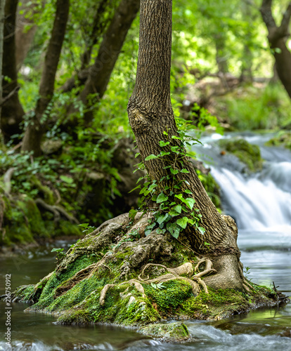 Foto Murales Small tree growing in river with falling small cascadein long exposure on background
