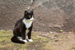 cute black and white cat sitting among the scattered cigarettes