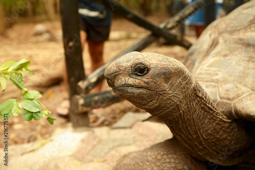 Foto Spatwand Schildpad Portrait large old Galapagos tortoise close up