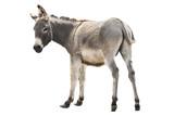 donkey isolated a on white