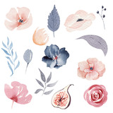 Watercolor figs flower compositions