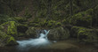 austrian jungle canyon - 216808328