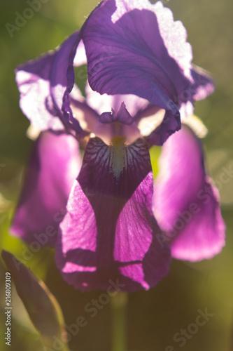 Aluminium Iris purple orchid
