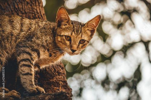 Foto Spatwand Kat Cute tiny kitten