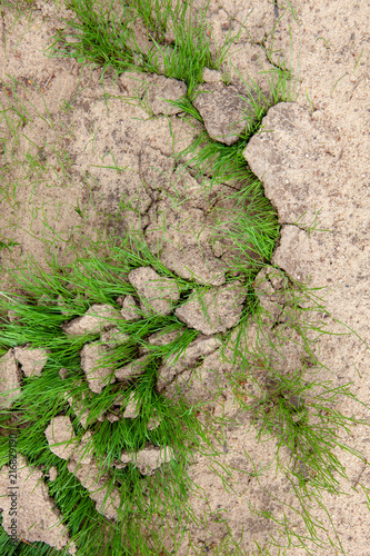 In de dag Stenen Green grass growing from cracked earth. New life. ... Dry land, Global Warming, agriculture concept