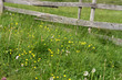 Rustic wooden fence surrounding a meadow with wildflowers