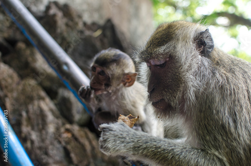 Foto Spatwand Aap Monkey Mother and her child