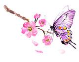 sakura tree; watercolor, cherry bloom - 216841165
