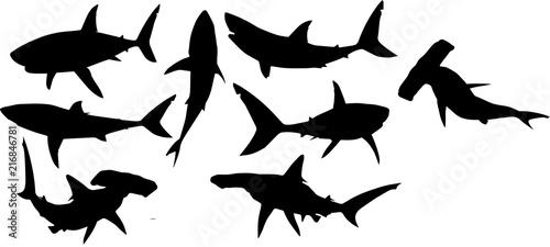 Fototapeta サメのシルエット