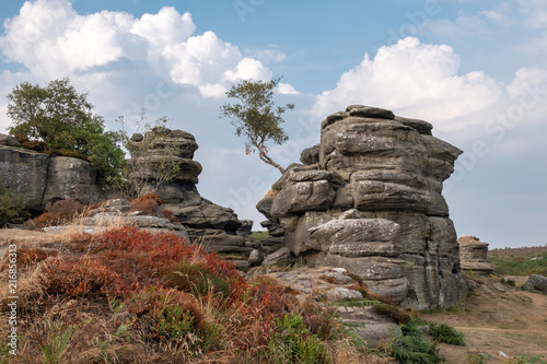 Canvas Diepbruine Scenic view of Brimham Rocks in Yorkshire Dales National Park