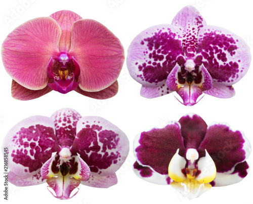 Orchids Isolated Flowers Collection Tropical Plants Set
