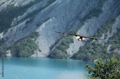 Canvas Eagle aigle pêcheur en vol