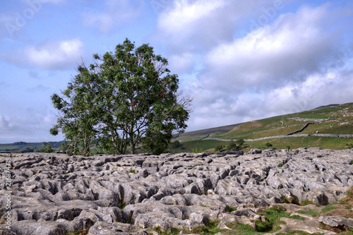Foto Spatwand Blauwe hemel Limestone scenery on top of Malham Cove in the Yorkshire Dales National Park. Landscape with a single tree.