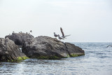 Gulls in the sea on a rock
