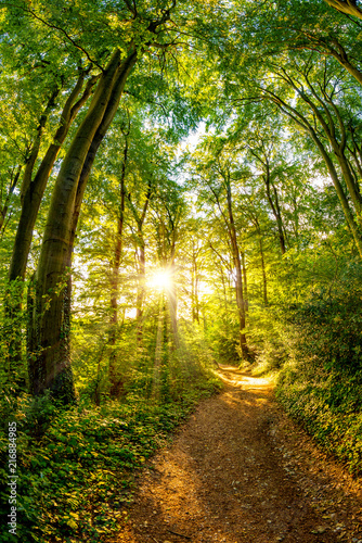 Foto Spatwand Weg in bos Path through the forest lit by golden sun rays
