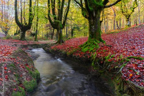 Fotobehang Herfst Otzarreta beech forest, Gorbea Natural Park, Vizcaya, Spain
