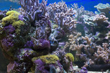 Aquarium. Diving. The oceanarium. Coral reefs.
